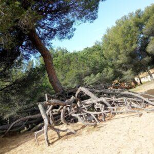 sentier_des_vignes_racines_visibles